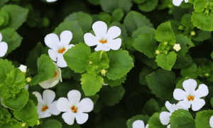 Tips For Using BRAHMI To Get Ahead Brain Memory